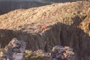 Translagorai - trekking di 3 giorni: il Bivacco Moro.