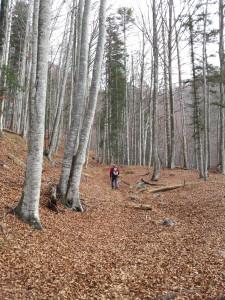 I boschi di faggi della Val Alba